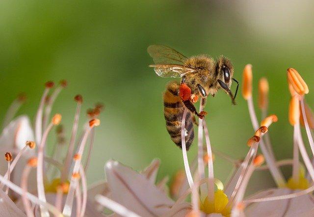 cvetlični med